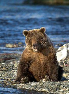Zoo Photos, Bear Photos, Bear Pictures, Cute Animal Pictures, We Bear, Bear Cubs, Grizzly Bears, Panda Bears, Rare Animals
