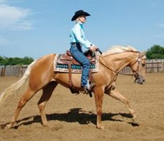 Here are three exercises to supercharge your security in the saddle and mold you into a more effective rider.) horseback riding 3 Tips to Glue You in That Saddle Horseback Riding Tips, Horse Riding Tips, Horse Tips, Pretty Horses, Beautiful Horses, Westerns, Horse Exercises, Horse Facts, Into The West