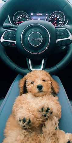 Untitled cute Puppy Dog animal pets is part of Cute animals - Cute Little Animals, Cute Funny Animals, Funny Dogs, Cute Dogs And Puppies, I Love Dogs, Doggies, Baby Dogs, Small Puppies, Cute Creatures