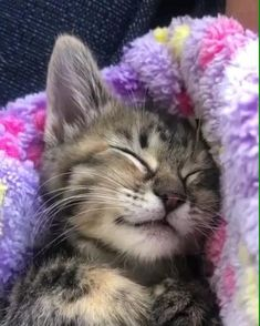 Funny Cute Cats, Cute Baby Cats, Cute Cats And Kittens, Cute Funny Animals, Cute Baby Animals, I Love Cats, Kittens Cutest, Animals And Pets, Funny Kittens
