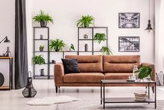 Picture of Urban jungle in modern living room interior with big comfortable leather couch and coffee table. stock photo, images and stock photography. Style Deco, Piece A Vivre, Bathroom Design Small, Home Trends, Deco Design, Better Homes And Gardens, Living Room Interior, Interior Livingroom, Living Room Designs