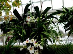 orchids in hanging baskets.  need to do this
