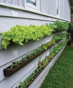 Gutters mounted to the siding and filled with soil - could be nice if there's no deck for container options.