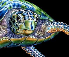 Items similar to Sea Turtle Colored Pencil Drawing 1 on Etsy Realistic Drawings, Cool Drawings, Pencil Drawings, Art Blanc, Sea Turtle Art, Sea Turtles, Pencil Drawing Tutorials, Turtle Painting, Art Inspiration Drawing