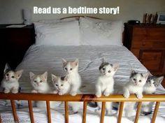 I Love Funny Cats