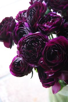 "Black Pearl ranunculus - image via The City Farmer collected by linenandlavender.net for ""To plant a garden..."""