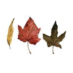 autumn leaves #wallisfavourites