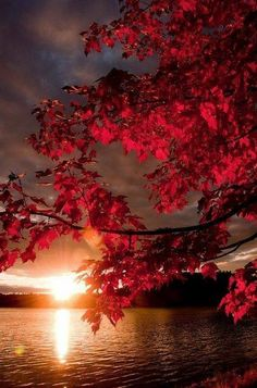 Red Autumn sunset red tree autumn lake leaves fall