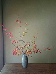 Beautiful branch of leaves in vase // Ikebana Arrangements Ikebana, Ikebana Flower Arrangement, Modern Flower Arrangements, Flower Vases, Flower Art, Cactus Flower, Arte Floral, Deco Floral, Floral Design