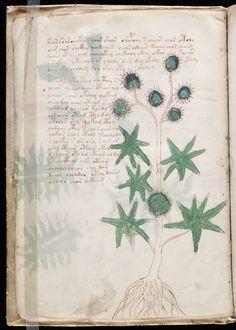 Voynich manuscript.  Voynich Manuscript ヴォイニッチ手稿 1912年イタリアで発見された古文書。暗号とおぼしき未知の文字で記され、多数の彩色挿し絵が描かれている