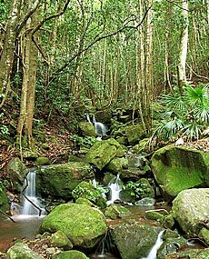South Coast/Kiama Area/Minnamurra Rainforest