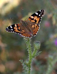 Kelebekler, Böcekler, Bitkiler