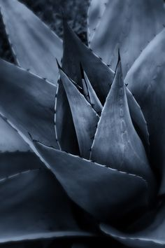 Photograph Agave by Frank Dobrushken on 500px