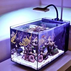 Saltwater Aquarium Setup, Coral Reef Aquarium, Saltwater Fish Tanks, Home Aquarium, Marine Aquarium, Aquarium Fish Tank, Nano Reef Tank, Reef Tanks, Reef Aquascaping