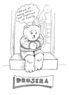 Drosera