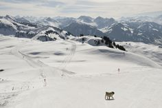 Ski holidays in Kitzbühel (Tyrol, Austria)