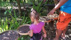 Sofia Learning About How Coffee Is Made - Luwak Coffee Taman Sari Bedugul