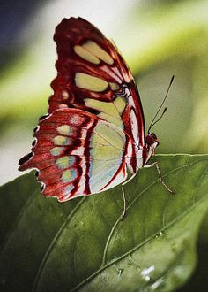 Butterfly by Bradley R Youngberg Malachite