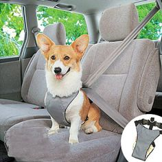 Pet Dog Car Vehicle Safety Seat Belt Harness 16482-in Dog Carriers from Home  Garden on Aliexpress.com