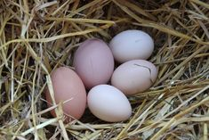 When you keep chickens you might have extra eggs to sell. Learn how to care for your eggs, keep them clean, label and prepare them properly for selling.