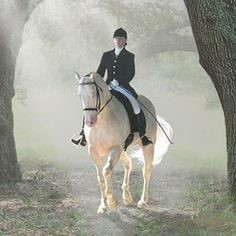 Raleighs Full Moon, Cremello American Warmblood Stallion