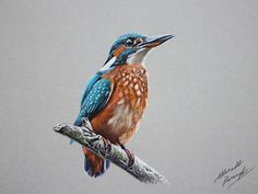 Kingfisher drawing by marcellobarenghi.deviantart.com on @deviantART
