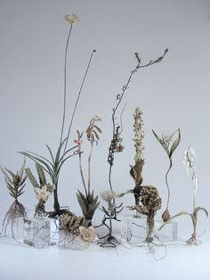 Foraged Flowers set on transparent bud vases for an airy, magical tablescape or centerpiece. Diy Flowers, Wedding Flowers, Bouquet Flowers, Silver Flowers, Flower Power, Fall Inspiration, Grand Art, American Crafts, Bud Vases