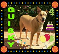 Hoy cumpleaños el bueno de Guisky le deseamos muchos mimos y chuches 🎉🎈🍗🎂🎈🎉💞😘😘