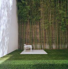 natural urban garden with bamboo