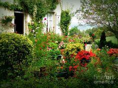 french gardening   French Cottage Garden Photograph - French Cottage Garden Fine Art ...