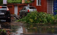 Peste 30 de copaci doborâţi de vânt, 14 maşini avariate, panouri publicitare căzute, în Capitală