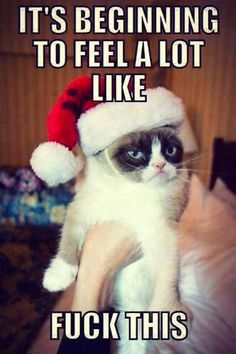 Grumpy cat.....starting to feel alot like... LOL! I can honestly say I did laugh out loud at this.