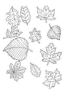 Différentes feuilles de plantes à colorier