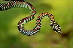 Resultado de imagem para fotos de cobras e serpentes