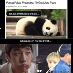 My friend just told me about this panda today but my mind went straight to THOSE pandas!! #panda #Seungri #Tao