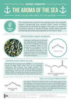 The distinct smell of being at the ocean is one of my favorites. Here's an info graphic that explains the chemistry behind the aroma. This reminds me a lot of what we did the first day of class on aromatics.