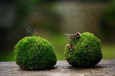 「苔玉のリサイクル」の画像 チョコレート盆々  Ameba (アメーバ)