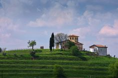 Berlucchi wine estate, Franciacorta, Italy.  A glimpse of #BerlucchiMood. To book a visit: http://www.berlucchi.it/live-en/foglia-news/guided-tour-with-tasting-in-franciacorta
