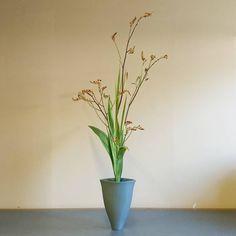 "#crocosmia means ""saffron scent""  #クロコスミア…"