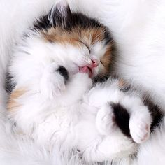 Love a calico kitty