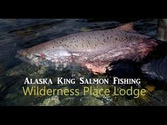 Alaska king salmon fishing at it's very best at Wilderness Place Lodge.