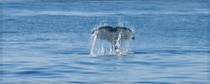 Go whale watching at Channel Islands