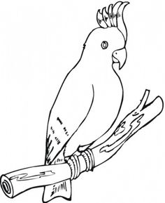 Cockatoo Parrot Coloring Page From Cockatoos Category Select 30423 Printable Crafts Of Cartoons Nature Animals Bible And Many More