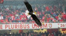 A Minha Chama: 2017/2018 - 16ªJ: SL Benfica 1 Sporting 1