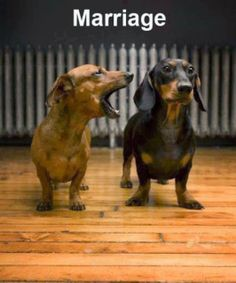 Of course this doesn't apply to ALL marriages...just 99.9%  :)  Funny pic | funny dogs | marriage
