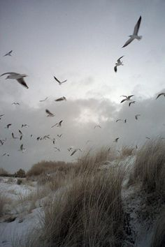 The movement of the birds along with the beach and vegetation. More