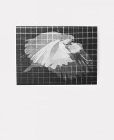 Bird Lenticular Postcard