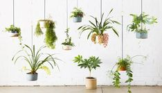 Most Hot Hanging Plants Ideas at the End of the Year Most Hot Hanging Plants Ideas at the End of the Year - Most Hot Hanging Plants Ideas at the End of the Year - LUCKYTHINK Diy Hanging, Hanging Planters, Garden Planters, Hanging Gardens, Indoor Plant Wall, Indoor Plants, Clematis, Leaf Images, Backyard Landscaping