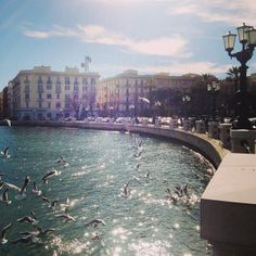.@marinaquita | Spettacolo a Bari #bari #sunday #gabbiani #puglia #weareinpuglia #sun #lungom... | Webstagram
