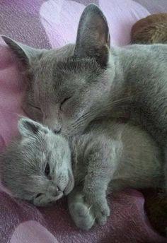 Awwwww l'amour maternelle <3 <3 <3 ****